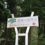 日本一!東法田の大アカマツ 山形県最上町