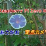 Raspberry Piでアサガオ定点カメラ